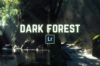 Free Dark Forest LightroomPreset